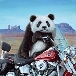Born to be Wild by Steve Tandy - Limited Edition on Canvas sized 20x20 inches. Available from Whitewall Galleries